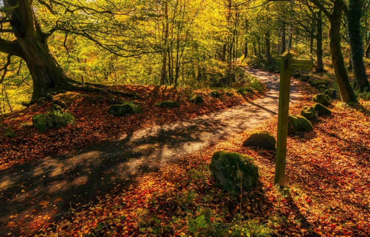 Perdersi in un bosco vicino a Torino. Si può.